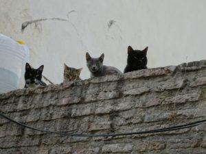 Cuartel de la Cava, muro, gatos