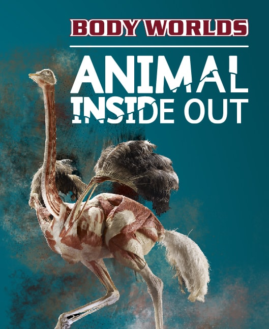 ANIMAL INSIDE OUT