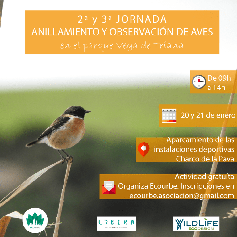 Jornadas de obsevación y anillamiento de aves en el Parque Vega de Triana