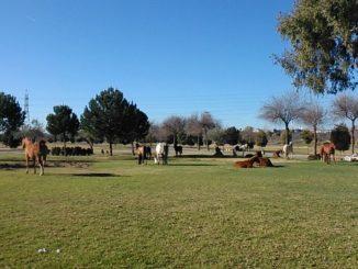 fauna, Caballos, Parque Vega de Triana
