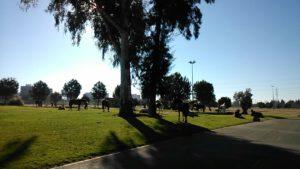 Caballos, Parque Vega de Triana, fauna