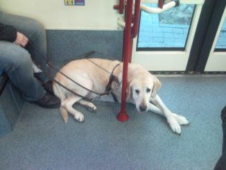 Perros, Tussam, transporte público