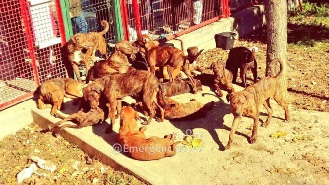 18 perros abandonados