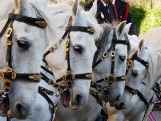unidad caballería Policía nacional, España